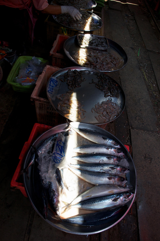 ray of sun lighting up fish