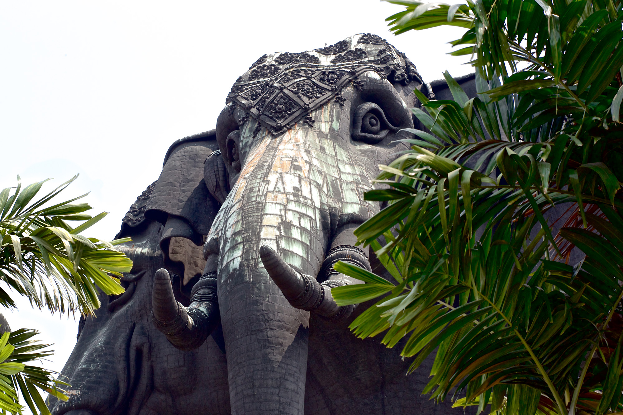 Close-up of elephant head