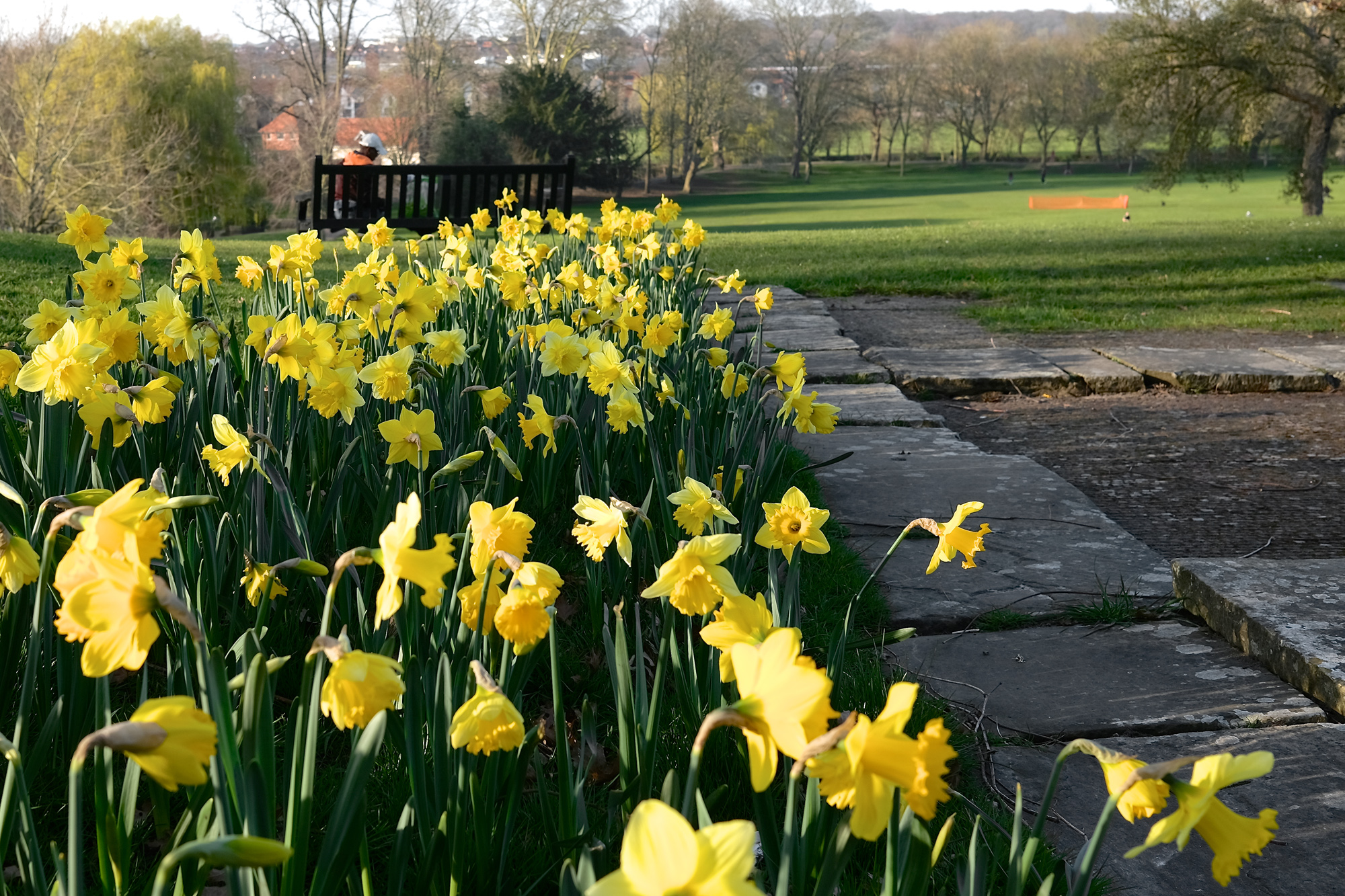 daffodils and an archaeological site